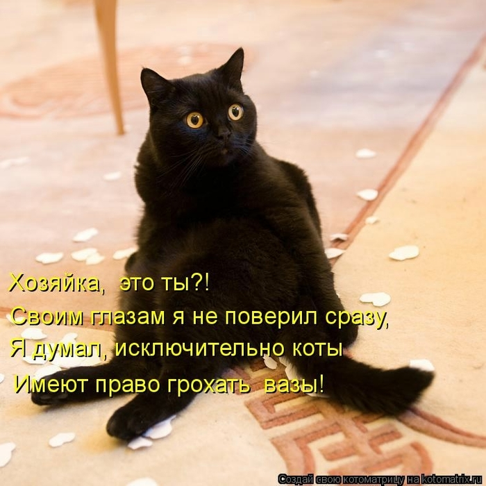 kotomatritsa_Lx (700x700, 281Kb)