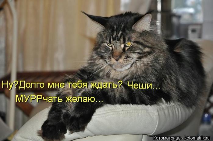 kotomatritsa_s5 (700x464, 201Kb)