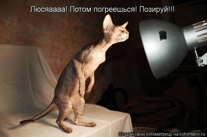 kotomatritsa_un (700x464, 164Kb)