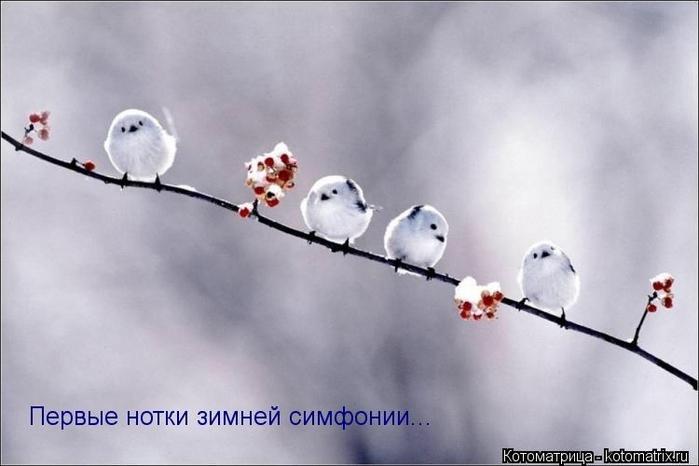 kotomatritsa_N (700x466, 152Kb)