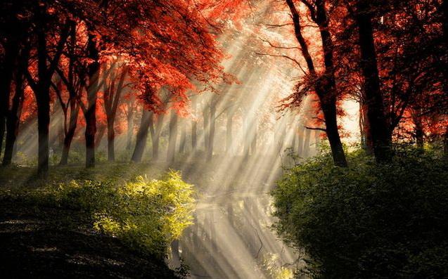 Sun_rays_001 (637x397, 314Kb)