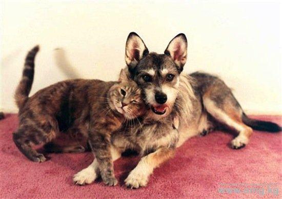 собака спасающая кошек/4171694_sobaka_djinni_foto_1 (550x388, 38Kb)