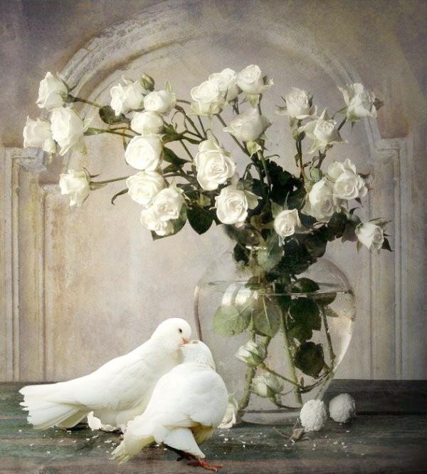 розы и голуби (600x665, 120Kb)