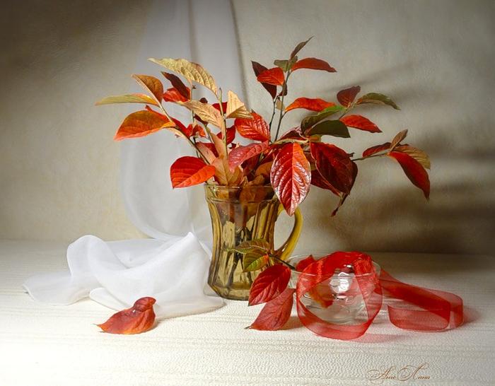 Цветок клематис фото описание видов и сортов видео