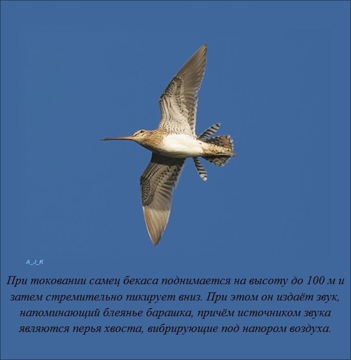 1381402074_fact-10102013-003 (684x700, 144Kb)
