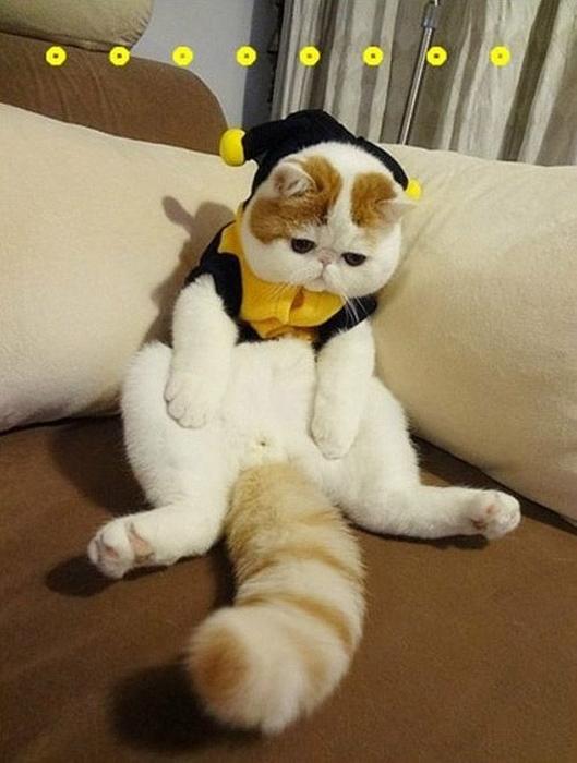 Для котов самое интересное в блогах