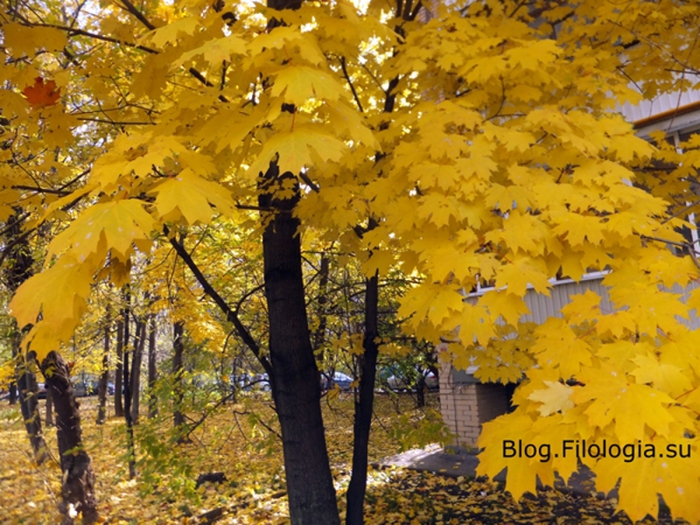 Золотая осень/3241858_osenneu (700x525, 313Kb)