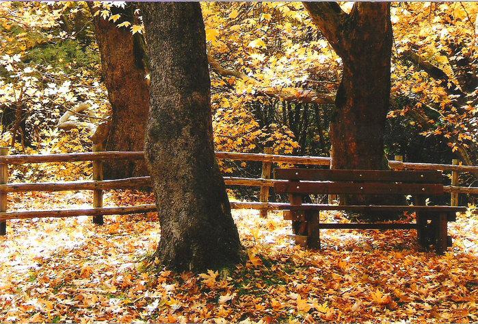 lake-of-tears-forever-autumn-i3 (700x473, 236Kb)
