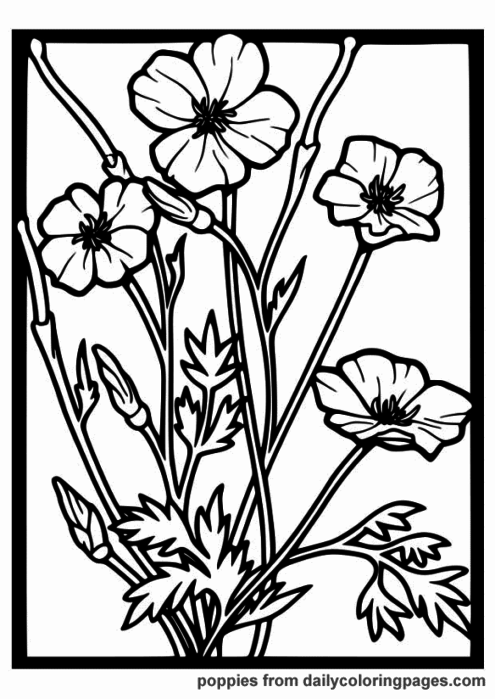 realistic-flower-coloring-pages-14 (495x700, 98Kb)