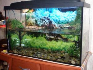 аквариум_черепахи (300x225, 105Kb)