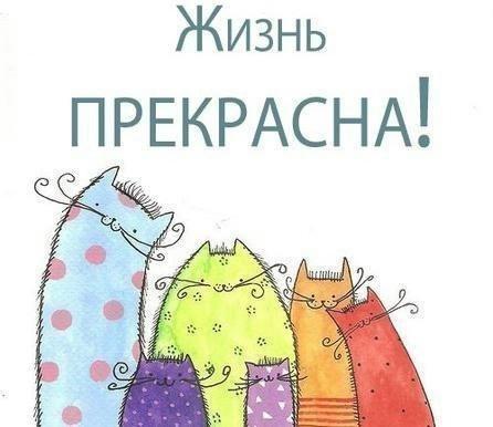 post-mimichnosti-kotiki-kartinki-koshki-sobaki-smeshnye-zhivotnye-kote_944813678 (446x386, 66Kb)