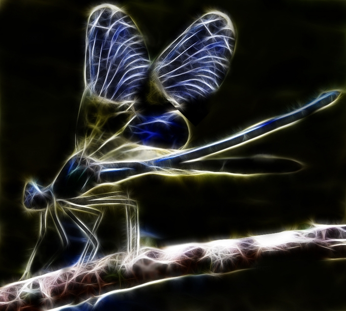 fractal_dragonfly_by_minimoo64-d3b561w (680x612, 254Kb)