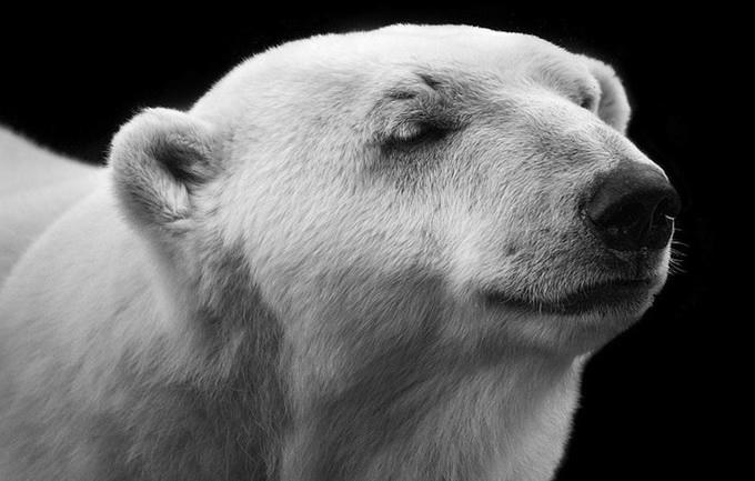 портреты животных фото 5 (680x433, 134Kb)