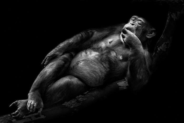портреты животных фото 11 (700x466, 97Kb)