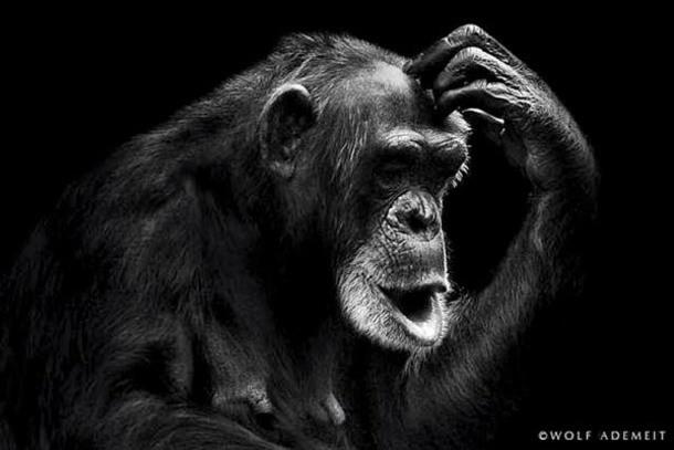 портреты животных фото 13 (610x407, 90Kb)