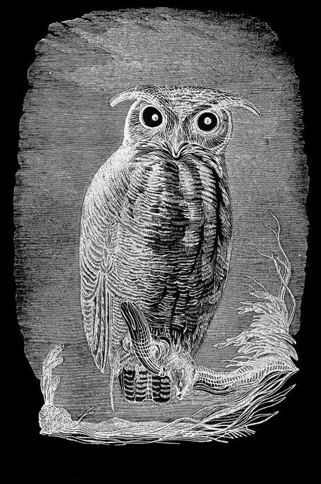 СОВЫ. Винтажные картинки для творчества (25) (463x700, 231Kb)