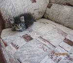 ������ Котенок МУ�-1мес.Солнцево видео,фото 001 (700x607, 429Kb)