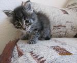 ������ Котенок МУ�-1мес.Солнцево видео,фото 004 (700x574, 332Kb)