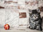 ������ Котенок Мурр 1мес. Солнцево 004 (700x524, 239Kb)