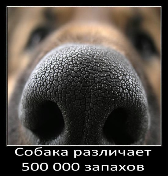 3 (550x575, 123Kb)