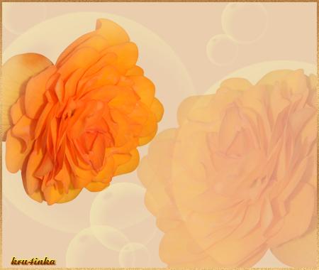 Нежность-роз (450x380, 169Kb)