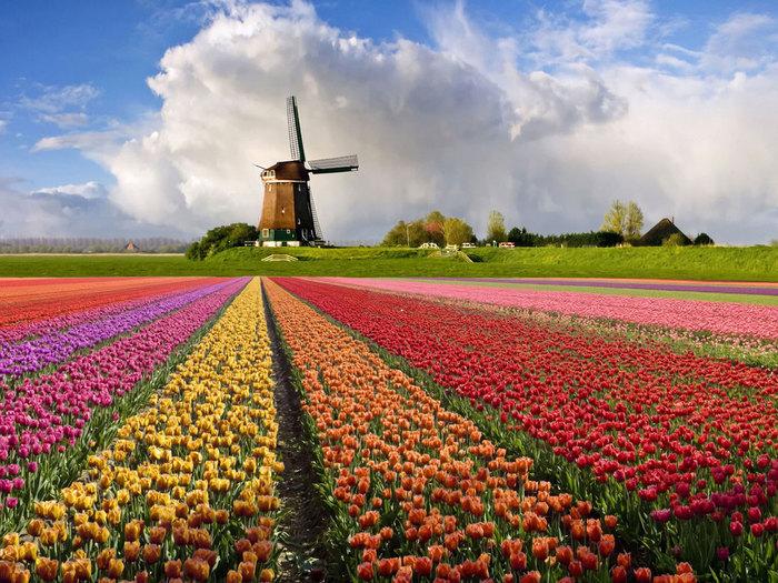 1367314868_nederland (700x525, 156Kb)