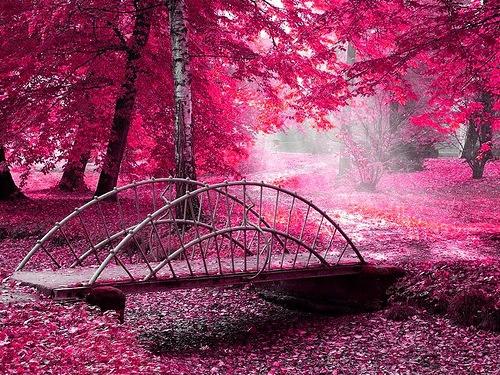 Розовая поэзия