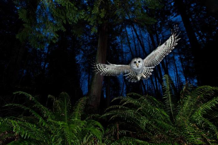 фотографии дикой природы 1 (700x466, 376Kb)