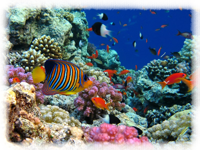рыбы-обр (400x300, 338Kb)