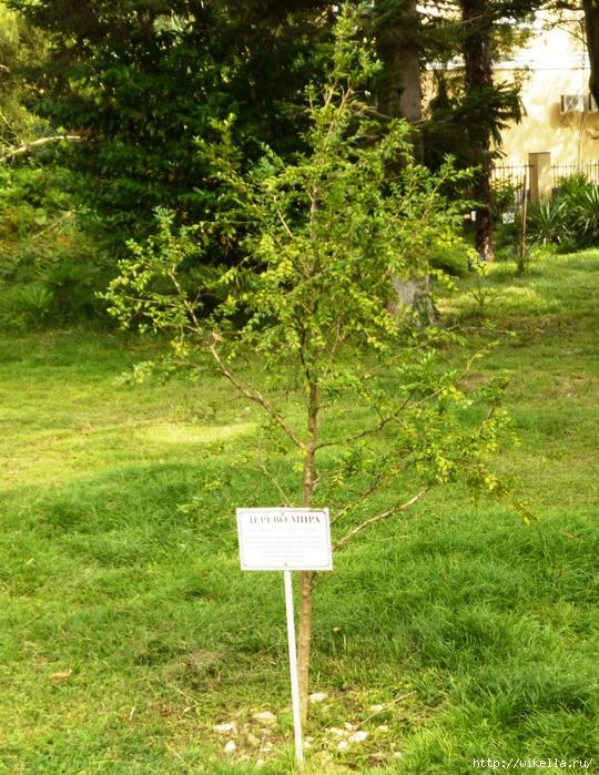 12 дерево мира (540x700, 358Kb)