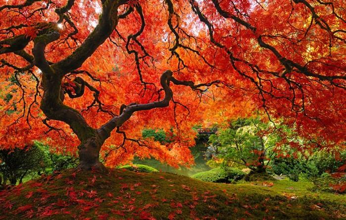 fall011-800x508 (700x444, 162Kb)