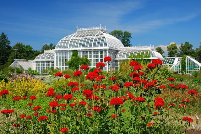 ботанический сад хельсинки 20 (640x427, 388Kb)