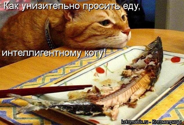 kotomatritsa_1W (634x432, 161Kb)