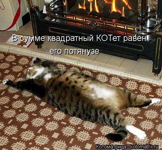 kotomatritsa_03 (517x480, 204Kb)