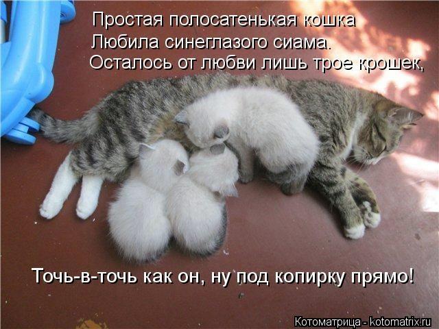 kotomatritsa_7R (640x480, 153Kb)