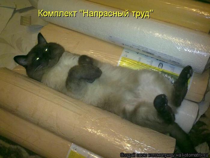 kotomatritsa_o (700x524, 219Kb)