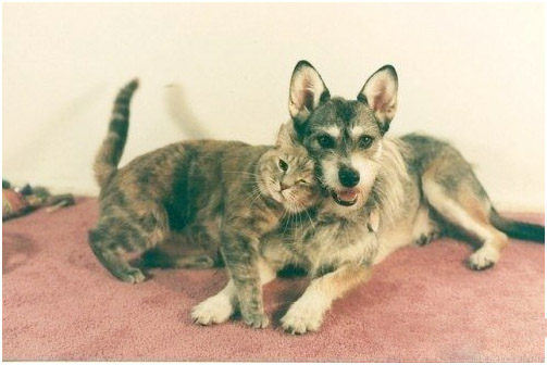 Почетная кошка (503x336, 65Kb)