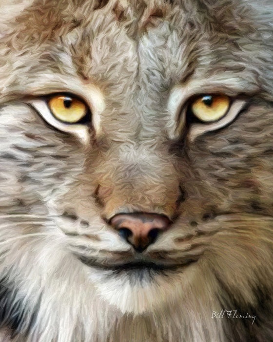 75976386_large_bobcat_by_komodoempired2v2ra5 (560x700, 283Kb)