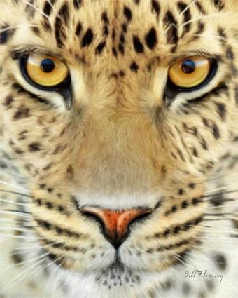 jaguar_by_komodoempire-d2uamsm-720x900-340x425 (340x425, 143Kb)