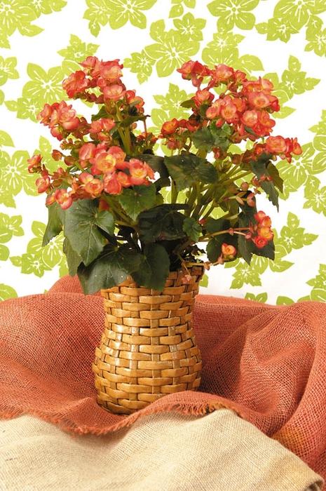 Плетение из газетных полосок. Вазочка для сухоцветов (21) (465x700, 319Kb)