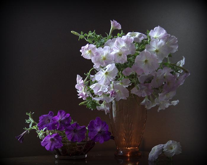 Цветы запоздалые. Натюрморты