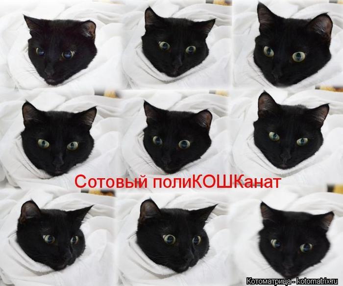 kotomatritsa_PQ (700x584, 222Kb)