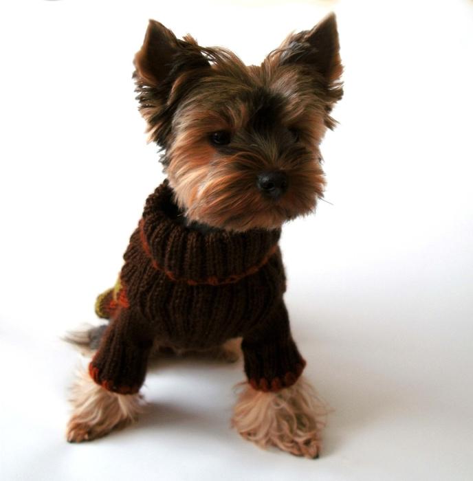Вязанье для собачек (8) (688x700, 193Kb)