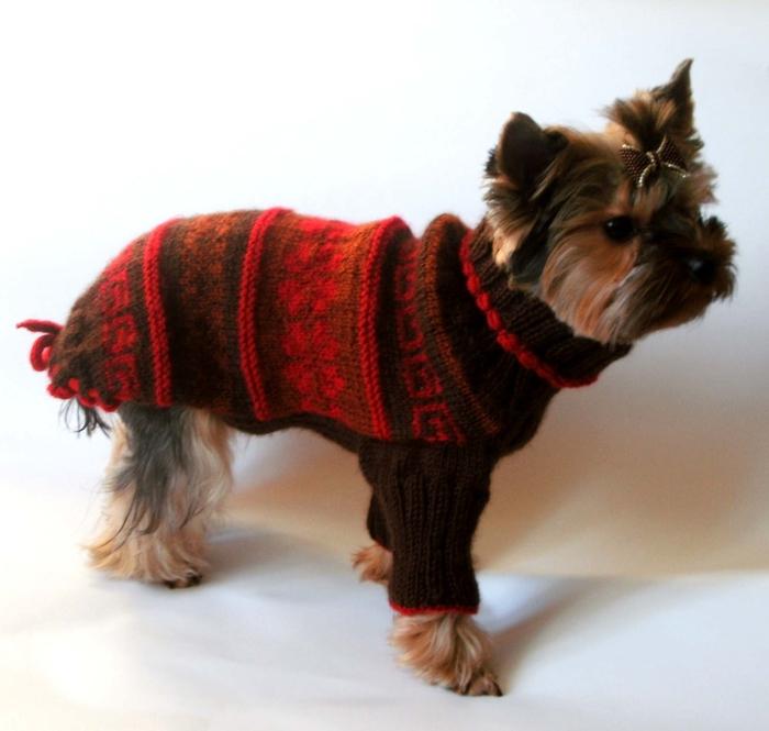 Вязанье для собачек (15) (700x665, 222Kb)