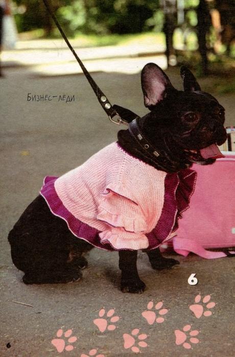 вязаная одежда для собачек (8) (460x699, 278Kb)