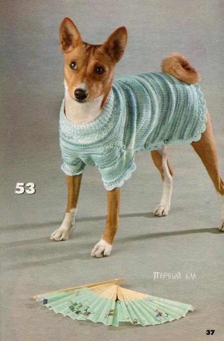 вязаная одежда для собачек (28) (460x699, 256Kb)