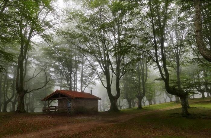дом в лесу фото 5 (700x459, 285Kb)