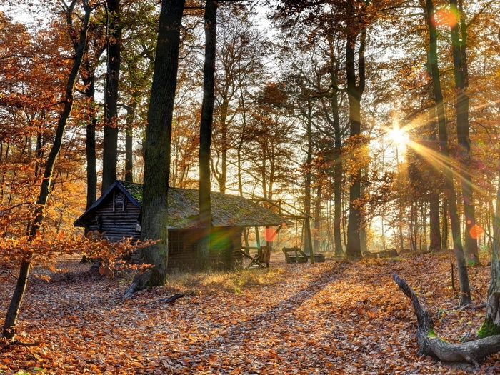 дом в лесу фото 12 (700x525, 417Kb)