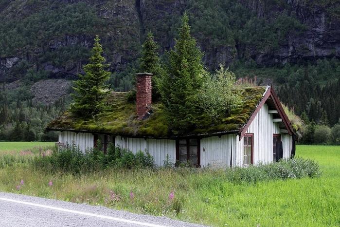 дом в лесу фото 14 (699x466, 273Kb)