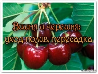 1379244578_yhod-za-viwneu-i-cherewneu-onlaun-rekomendaciya (200x150, 19Kb)